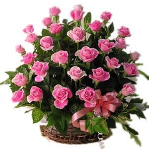 Pink Rosy Grandeur