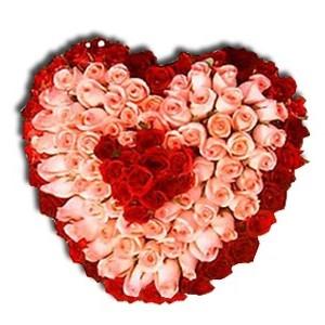 Heart Carnation Roses