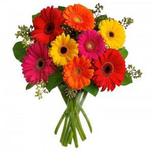 Gerberas flowers online
